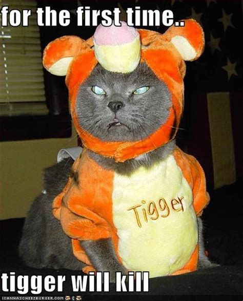 funny image collection cat halloween funny pics