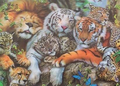 Tiger Lion Leopard Tigers Lions Leopards Cats