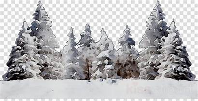Clipart Background Winter Snow Trees Tree Clipground