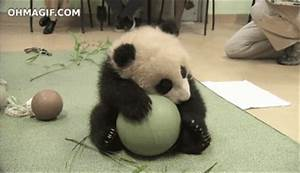 Panda Playing GIF - Find & Share on GIPHY