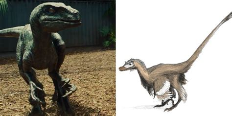The Disappointing Truth About The Jurassic Raptors And 3