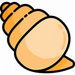 Shell Conch Icons Icon