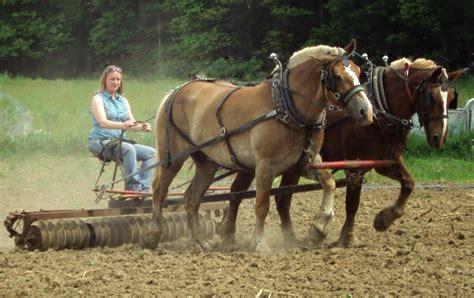 horses farm power amish draft animal horse farms homestead tags