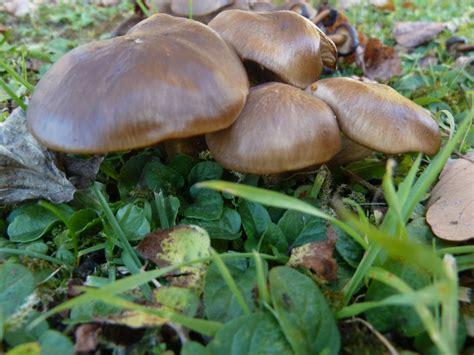 Pilze Im Garten by Pilze Im Garten Pilzbestimmung U Bestimmungshilfe