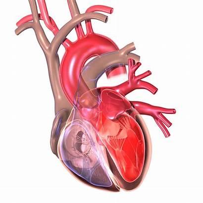 Cardiac Heart Tissue Imaging Medical Cleveland Clinic
