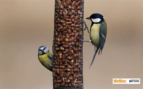 topic 8 feeding diet see nature observing nature