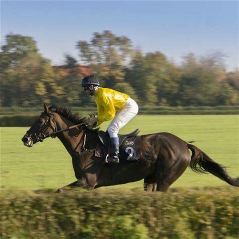 animals run horse fast around horses fastest