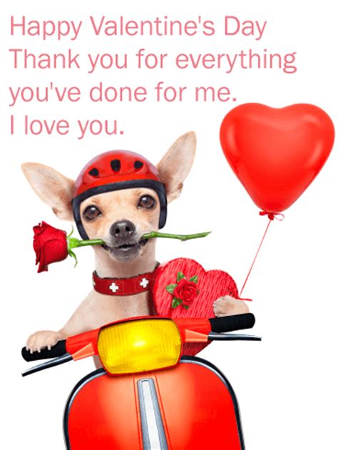 romantic chihuahua happy valentines day card birthday greeting