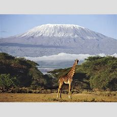 Traveller's Guide Tanzania  The Independent