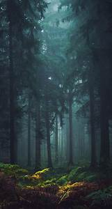 Misty, Forest, Iphone, Wallpaper, U2013, Cool, Backgrounds