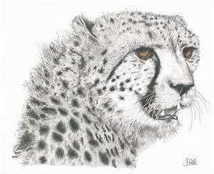 Cheetah Glory Drawing By John Hebb