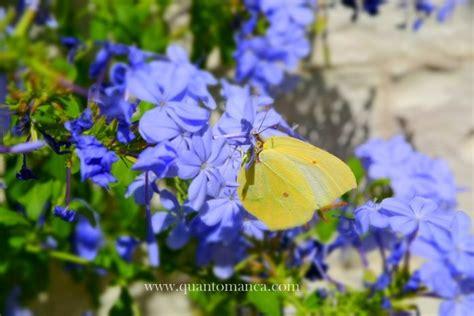 Farfalle In Casa by Delle Farfalle In Italia Dove Vola La Leggerezza