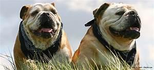 Idealgewicht Hund Berechnen : di tfutter f r hunde ~ Themetempest.com Abrechnung