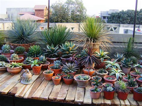 cactus and succulent container gardens small shade garden