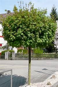 Kleine Bäume Für Vorgarten : baume fur den vorgarten ~ Sanjose-hotels-ca.com Haus und Dekorationen