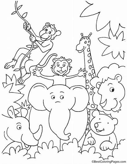 Jungle Coloring Pages Fun Animals Animal Safari