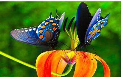 Butterfly Butterflies Nature Flowers Lot Wallpapers Insects