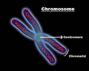 2  34  Chromosomes