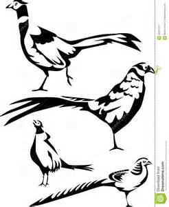 Black and White Pheasant Drawings