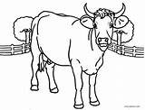 Cow Coloring Pages Printable Cartoon Adults Head Cool2bkids Colorings Getcolorings Sheets Getdrawings sketch template