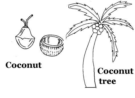 coconut tree coloring sheet coloring pages