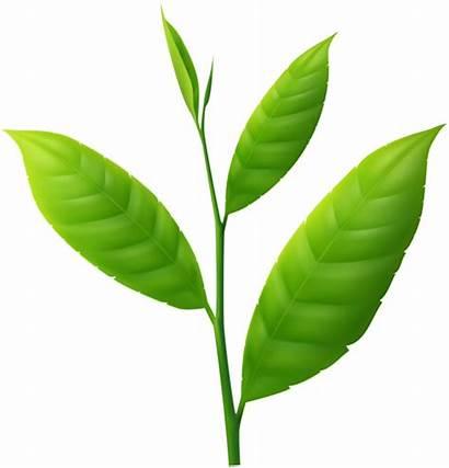 Plant Clipart Spring Transparent Yopriceville