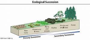 Plant Succession Study