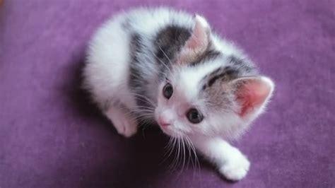 Funny Tiny Cute Baby Kittens