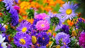 Summer – Flowers of St Petersburg Florida
