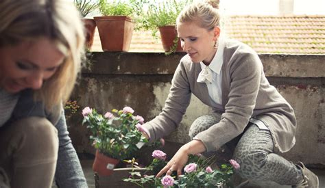 Der Gartenbau Offene Stellen by Offene Stellen Blumengesch 228 Ft Gartenbau Olten Aarau