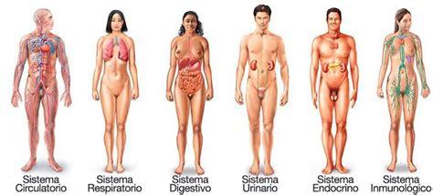 sistemas cuerpo humano sus funciones y aparatos