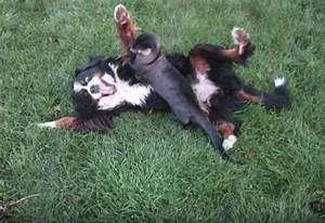Dog Playing With An Otter?! You Gotta See This