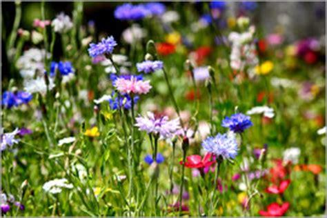 wildblumen lexikon mit bildern wildblumen poster bestellen gratisversand posterlounge