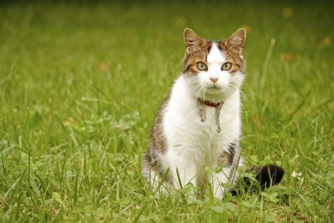 podemos ensinar um gato  sentar  meu animal