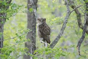 Protecting Endangered Owl Species with MATLAB Audio ...