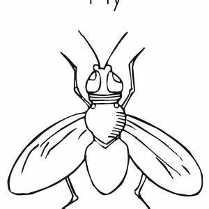How To Draw A Housefly
