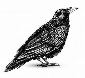 raven clip art - Google Search | birds & bees | Pinterest ...