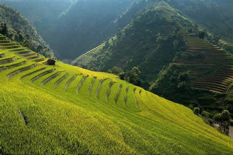 gorgeous rice terraces  vietnam scene