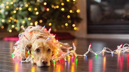 Christmas Pet Safety Dog Lights Card Wrapped