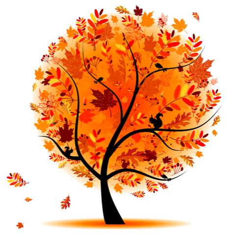 Image result for autumn tree png