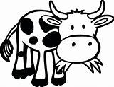 Cow Coloring Pages Outline Grass Printable Eating Funny Farm Animal Baby Cows Cartoon Animals Sheets Pdf Sheet Adult Zoo Game sketch template
