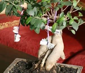 hochzeitsgeschenke mit geld basteln geldgeschenke originell verpacken geld bonsai basteln