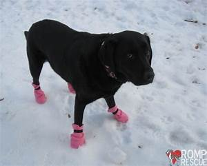 easy diy dog boots romp italian greyhound rescue With how to make dog shoes