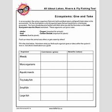 Ecosystems Give And Take Graphic Organizer For 5th  8th Grade  Lesson Planet