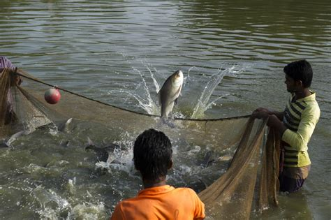Ethiopia Bolstering Aquaculture Ypard Young