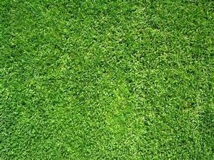 Erde Für Rasen : rasen mit braunen stellen und l cken ~ Lizthompson.info Haus und Dekorationen
