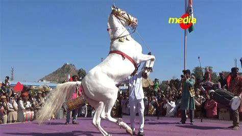 dance pushkar horse india fair rajasthan