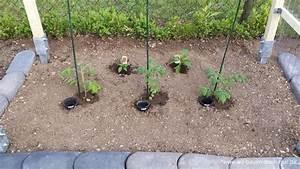 Gurken Pflanzen Anleitung : tomaten pflanzen anleitung anleitung tomaten pflanzen vorziehen auf der fensterbank tomaten ~ Whattoseeinmadrid.com Haus und Dekorationen