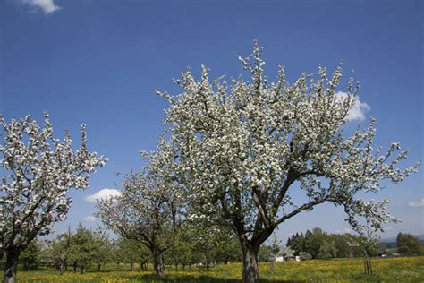 Considerations When Buying A Fruit Tree  Gardening Site
