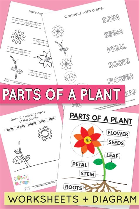 free printable parts of a plant worksheets itsy bitsy 731 | Parts of a Plant Worksheets for Preschool and Kindergarten